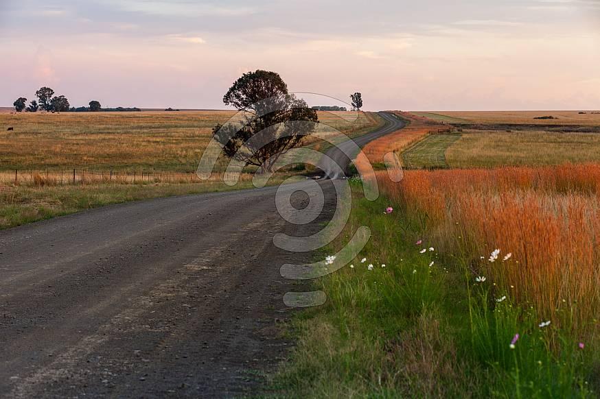 Free State gravel road
