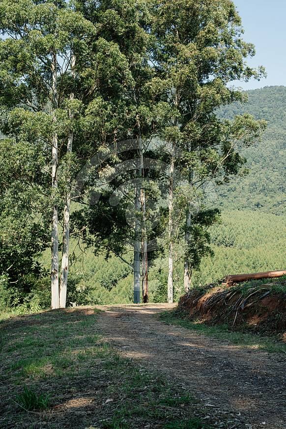 Dirt road with trees in Magoebaskloof mountains