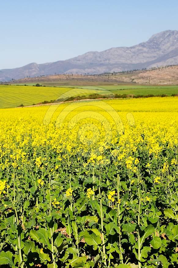 Green Flower Field